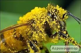Пилок бджолиний оптом