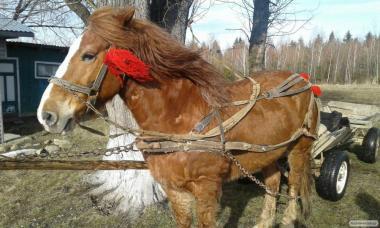 Продам коня,