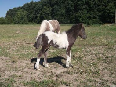 Жеребёнок пони