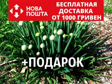 Цибуля-батун насіння 20 шт (татарка, дудчастий, Allium fistulosum)
