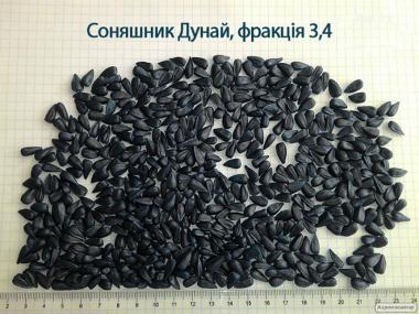 Семена подсолнуха «Дунай  2016» (Сербский гибрид)