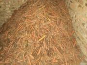 Продам некондиційну моркву