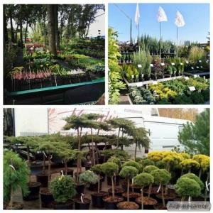 Индивидуальный подбор и закупка любых видов растений.