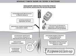 ГУМАТ КАЛИЯ от 20 грн./л (Собственное производство)