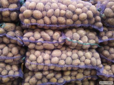 Картопля сорт Беллароза і білі сорти