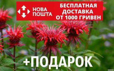 Монарда двойчатая (бергамот, Monarda didyma) насіння 20 шт