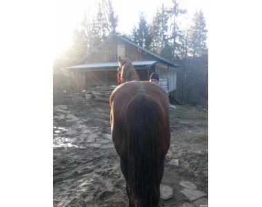 Продам коня, возраст - 7 лет