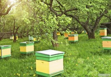 Пчелопакеты Украинская степная 2017