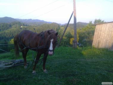 Рабочий конь