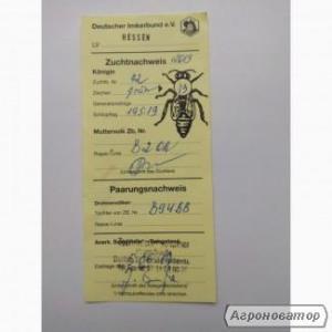 Бджоломатка F1 Бакфаст плідні та неплідні лінія B2