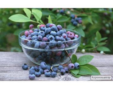 Черничная паста «Жидкие фрукты» 550 мл