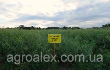 Вісбі насіння озимого ріпаку Lembke