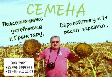 Фінальна розпродаж! Насіння соняшника,посівний матеріал!!!!