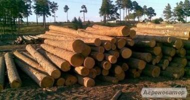 Ліс кругляк
