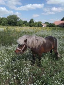 продам поні
