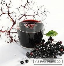 Продам сок черной бузины