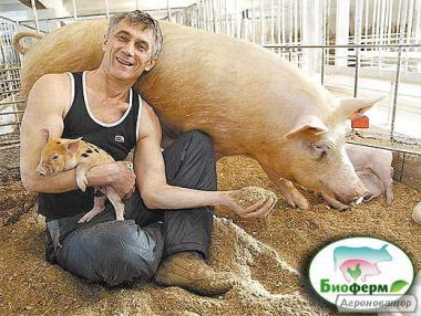 Ферментационная подстилка для свиней, кур, КРС