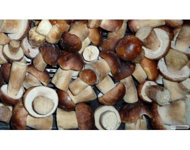 Польский гриб замороженный (есть целый и кубик)