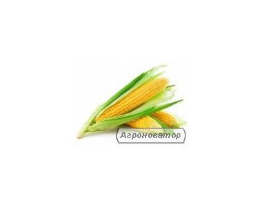 Насіння кукурудзи Монсанто