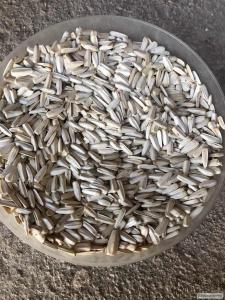 Кукурудза (попкорн)