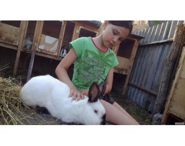 Продаются кролики пород: оберы, фландры, строкачи, калифорнийцы