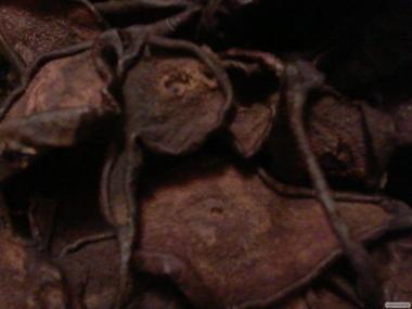 Груши сушеные