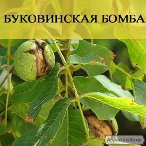 Саженцы орехов с доставкой по Украине