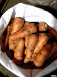Морква ВІКТОРІЯ