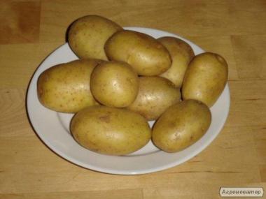 Продаеться семенной картофель. Первая репродукция Сорт