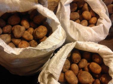Картофель кормовая для животных