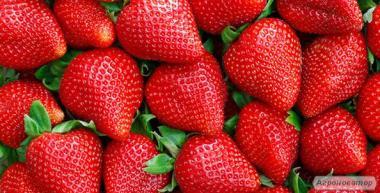 Продаємо полуницю (урожай 2017 року)