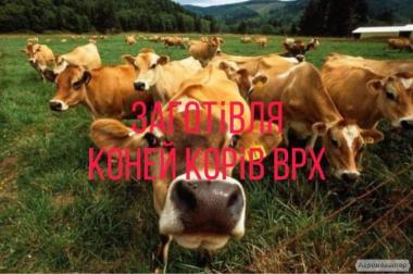 Заготівля корів коней ВРХ