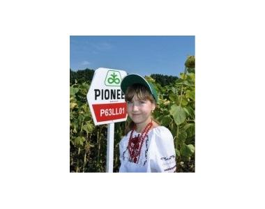 Семена подсолнечника пионер П63ЛЛ01 / P63LL01 (новый) RM 33