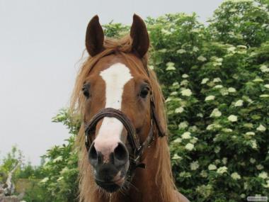 Продажа спортивного коня !