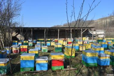 Продам бджолопакети української степової породи в кількості 100 шт