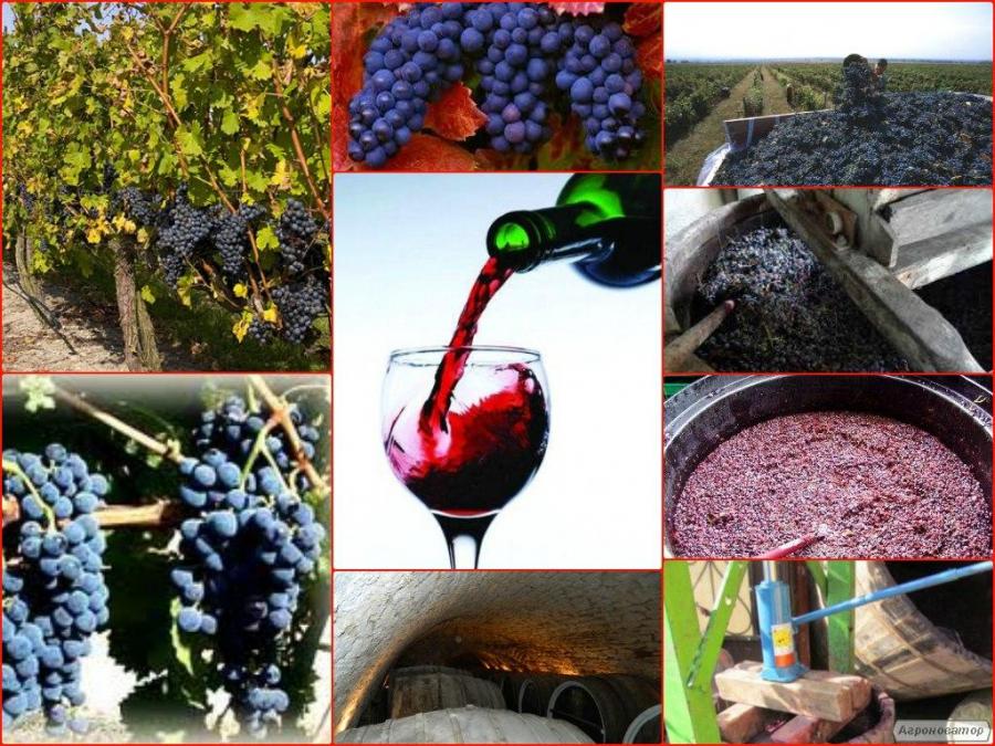 Натуральное домашнее вино Зайбер (Зейбель), красное сухое