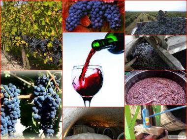 Домашнє вино Зайбер Київ і Україна