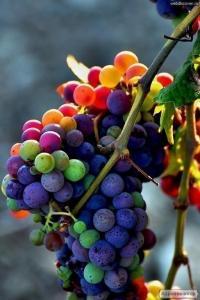 Вино домашнее из винограда Каберне, Одесский черный.