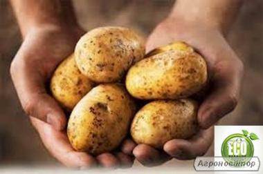 Продам органічну картоплю (картоплю).