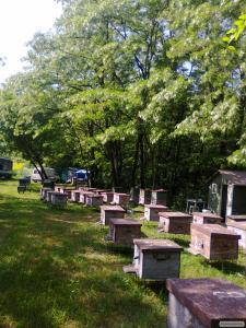 Предлагаем качественной мед с собственной пасеки в Полтавской области.