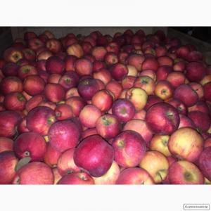 Продам яблука з холодильника Голден, Джонаголд та інші