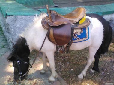 Кобилка поні робоча з лошам дуже рідкісного світло-сірого забарвлення