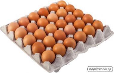 Яйця курячі на експорт