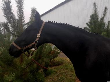 Розпродаж чудових коней