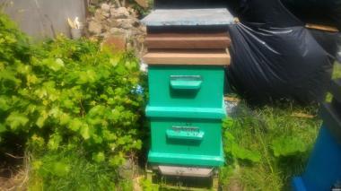 Продаю пчелиные семьи