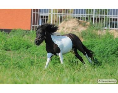 продам пони Кобыла