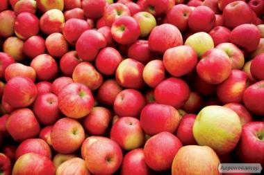 Продам яблука гуртом