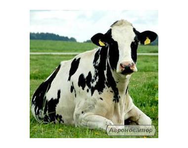 ВРХ від населення ( корови , бики, телята, свині , коні )