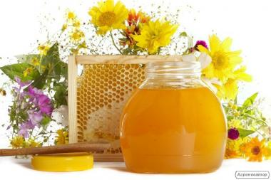Организация закупает мёд