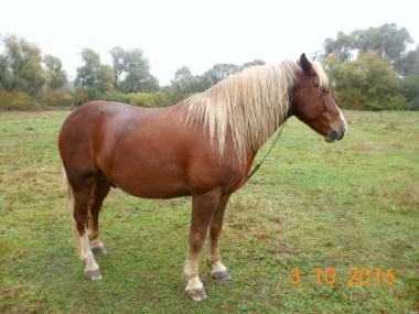 Продам коня та кобилу